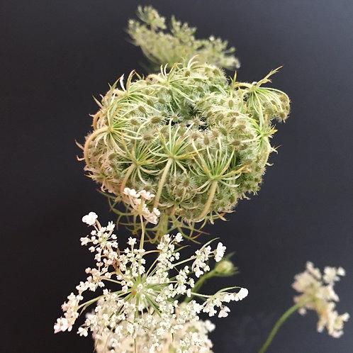 "Blumentapete ""Pure Wild Carrot"""