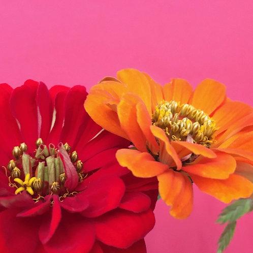 """Blumentapete """"Zinnia Beauty"""""""