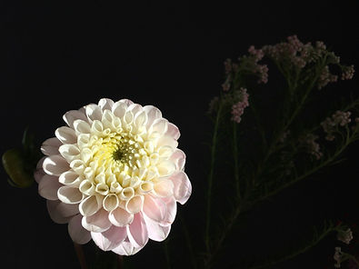 bloomyourroom_deepdahlia.jpeg