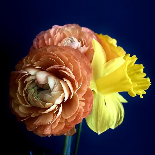 Orange Buttercup meets Daffodil