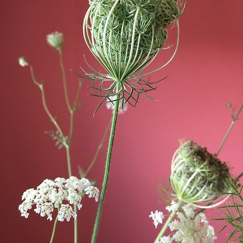 "Blumentapete ""Sparkling Wild Carrots"""