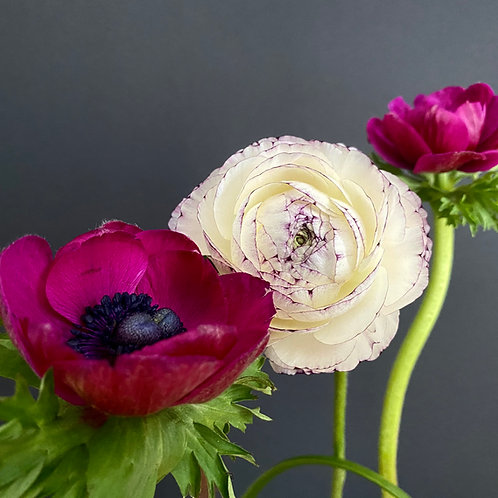 """White Buttercub meets Magenta Windflower"""