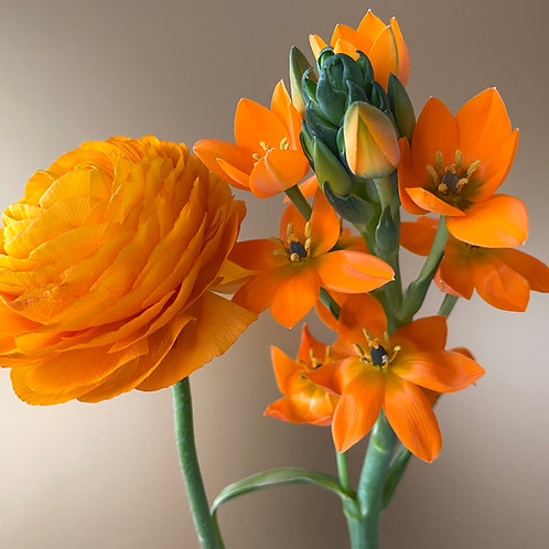 """""""Buttercup meets Star of Bethlehem in Orange on Gold"""""""