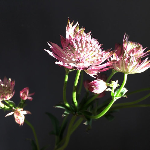 "Blumentapete ""Bright Stars"""