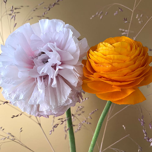 """""""Buttercup in Pink and Orange on Gold"""" II"""