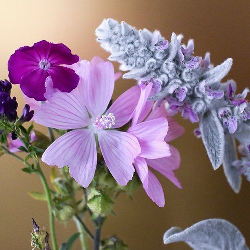 """""""Musk Mallow meets Lamb's Ears on Gold"""""""