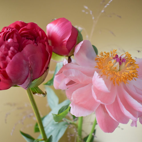 """""""Pink & Tender Peony on Gold"""""""