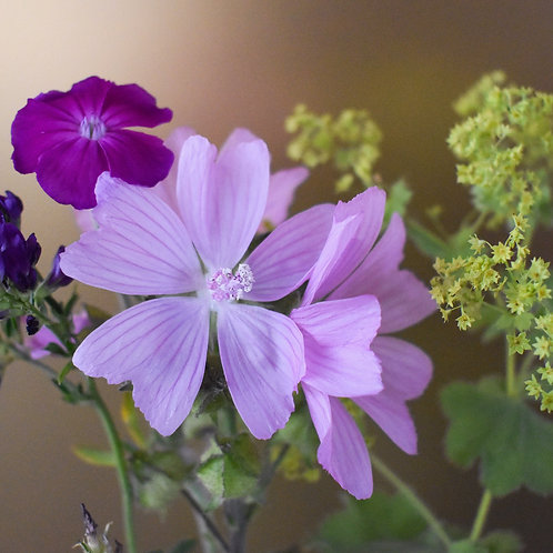 """""""Musk Mallow meets Red Campion & Ladies Mantle"""""""