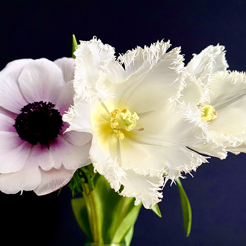 """White Crispa-Tulip meets Pink Windflower"" Trio"