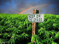 keep on the grass.jpg