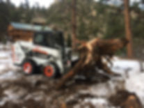 Stump Removal Estes Park