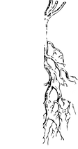 racine02[1244].png