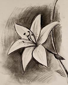 charcoa lily.jpg