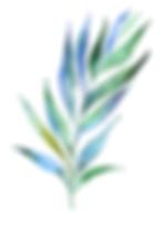 295-2956400_watercolour-watercolor-plant