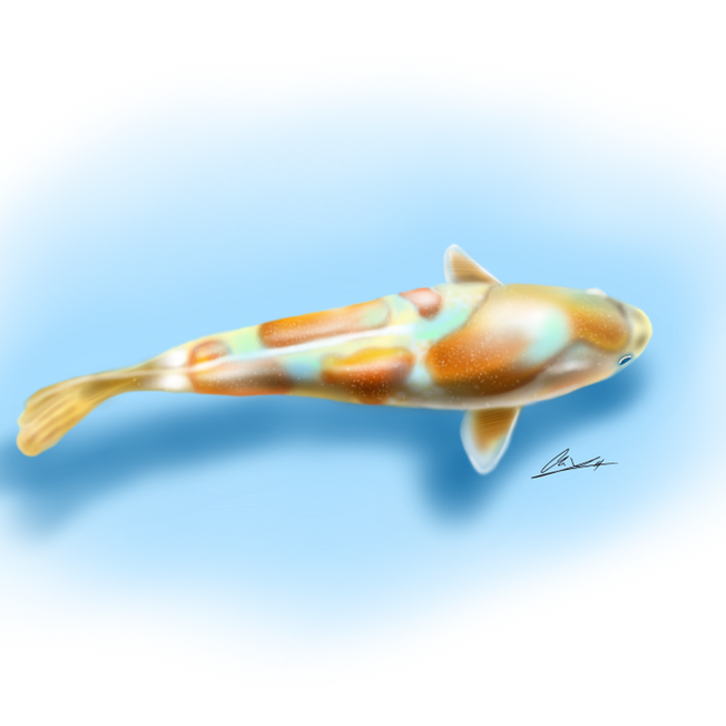 Koi-Fish-w:background.png