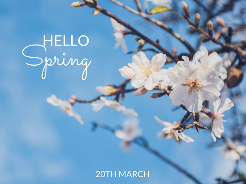 Spring health nutritional therapy
