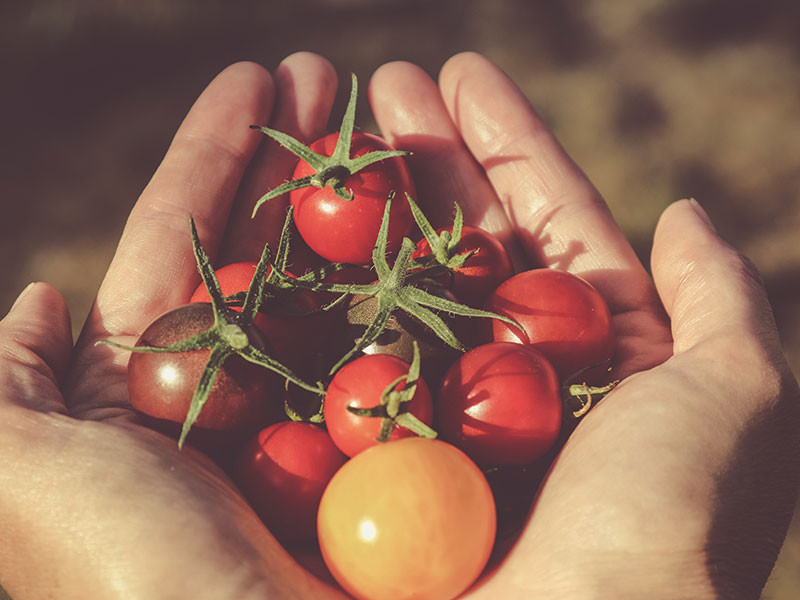 National allotment week with a nutritional therapist