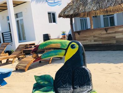 Ocean Breeze - Toucan Jacks