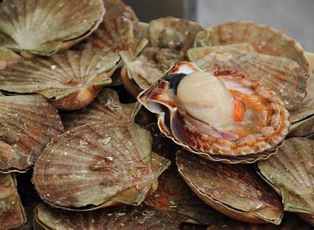 Rye Scallop/Oyster Festival