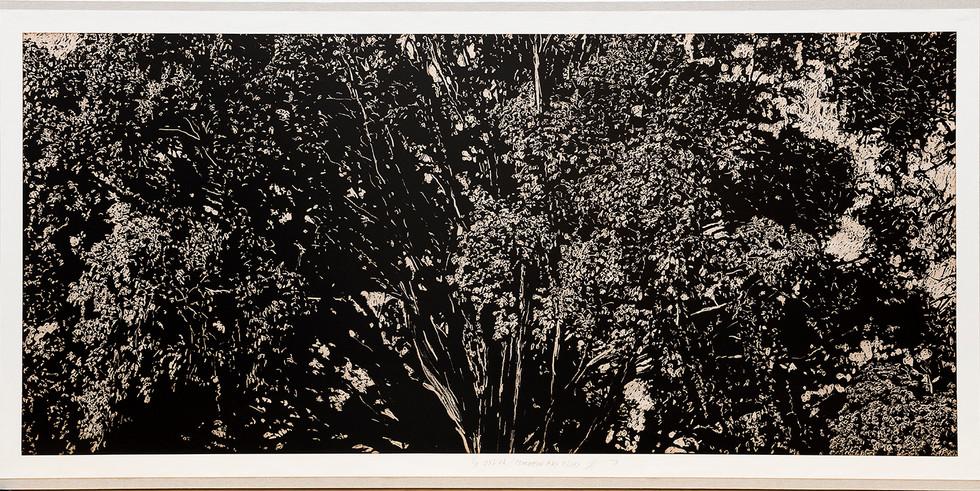 Sylva VII Moreton Bay Fig Tree.jpg