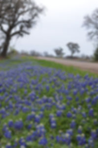 Round Top Texas in the Spring
