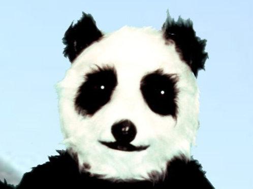 PANDA HEAD-ONLY