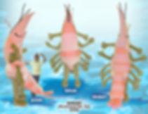 Facemakers Shrimp Mascot Costumes
