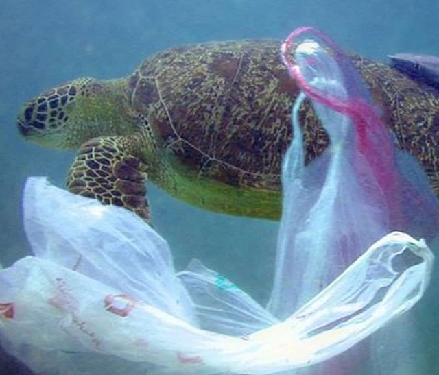 Landfill often ends up in the oceans