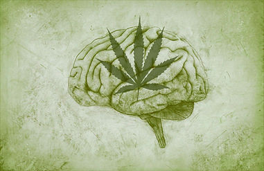 facts-about-cannabis.jpg
