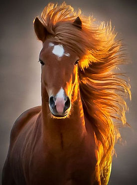 Jenn horse.jpg