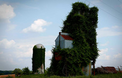 Nature takes over in West Tennessee