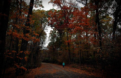 Overton Park's Old Forest in Memphis