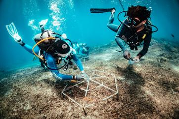 coral-restoration-2-resizedpng