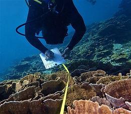 coral survey.jpg
