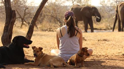 dogs_and_elephantsjpg