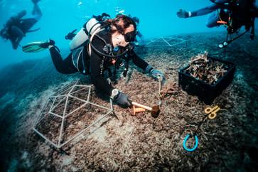 190421_mr-bcd-coral-restoration-gift-gro