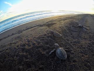 turtle1jpg
