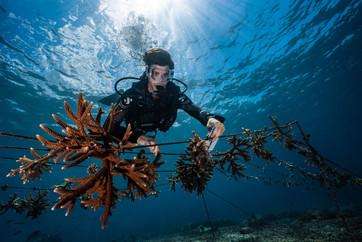 bali-coral-nurseryjpgjpg
