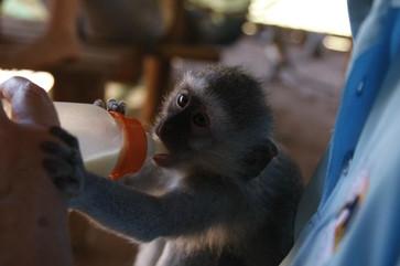 bambelela-wildlife-carejpg