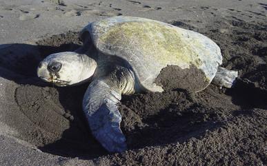 turtle-nestjpg