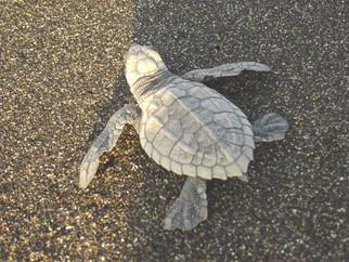 turtle-3jpg