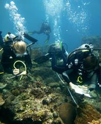 philippines-surveying-marine-aquatic-div