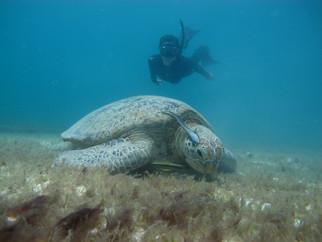 turtle-1jpg