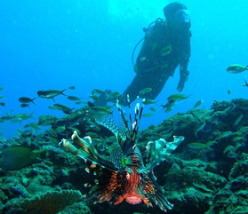 diver-and-lionfishjpg