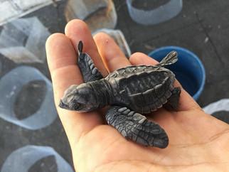 turtle-2jpg