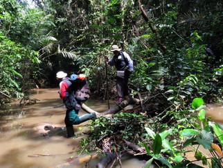 gorilla-survey-crossing-riverjpg