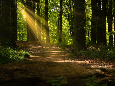 Discover Wonder through Forests