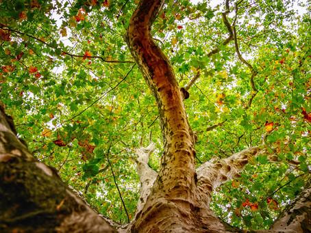Discover Wonder through Trees