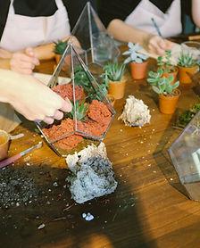 סדנת הכנת קפסולות צמחים מעוצבותת