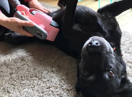FurWonder – der Zeckentrick für Hunde, Katzen und Pferde
